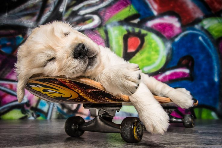 dog-rest-skateboard