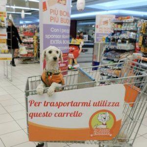 chien chariot supermarché