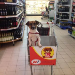 chiens chariots supermarché